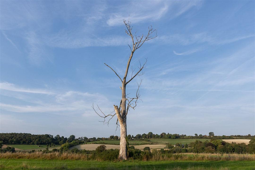 Door de droogte zijn alleen al in Limburg honderdduizenden bomen gestorven en complete bospercelen vernietigd. Foto: ANP