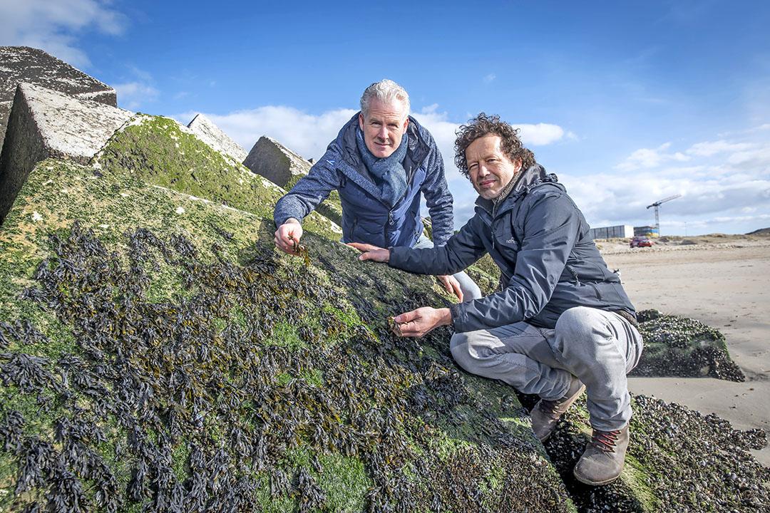 Edwin Sneekes (l) en Joost Wouters zijn twee van de drie oprichters van The Seaweed Company. Het bedrijf staat op het punt verschillende producten met zeewier op de markt te brengen. - Foto: Roel Dijkstra