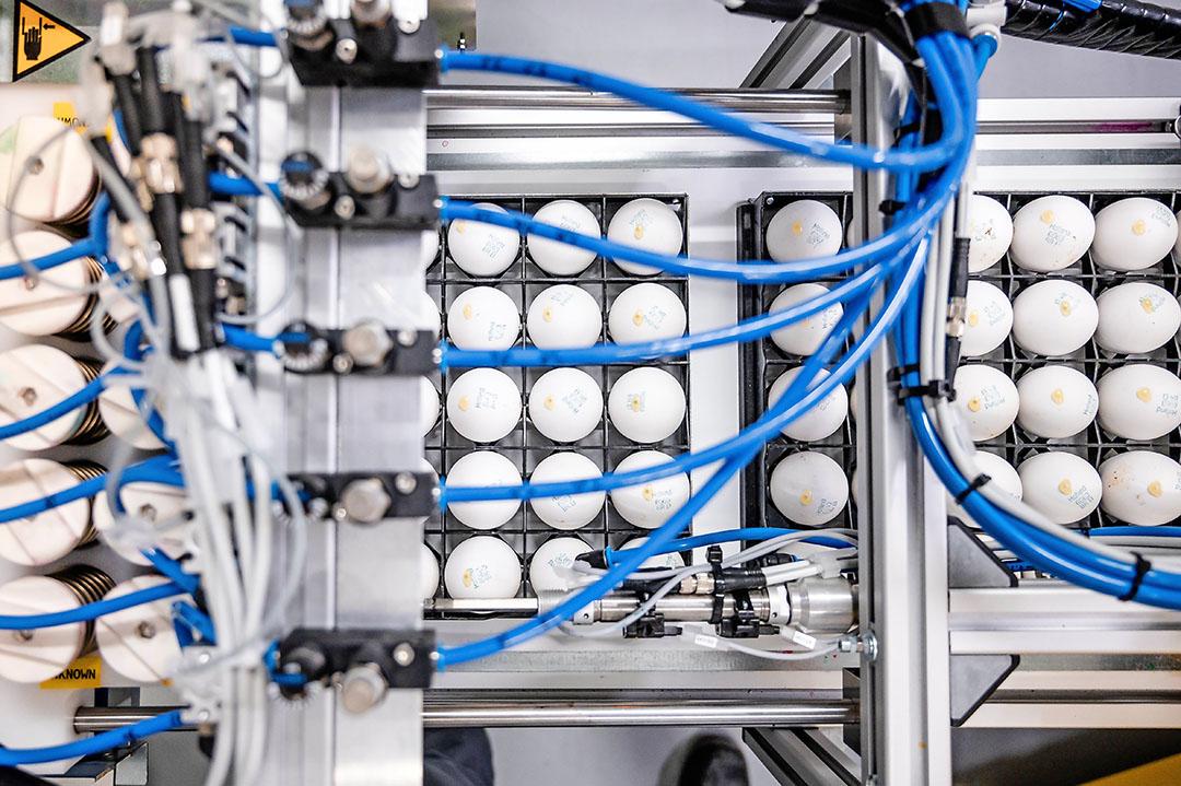 Onderzochte eieren, met dichtgeplakte prikgaatjes, staan 'in de wacht' tot analyseresultaten bekend zijn. - Foto's: In Ovo