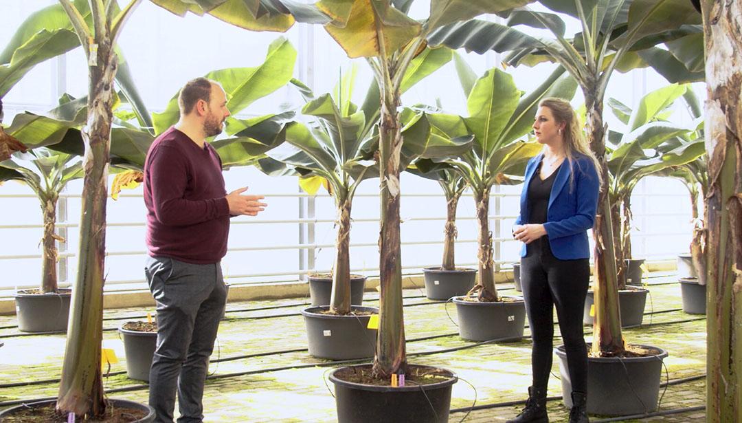 Pieter Vink, oprichter van Nederbanaan, vertelt presentatrice Iris Hofman over de Nederlandse bananenkas. - Beeld: Imago Mediabuilders