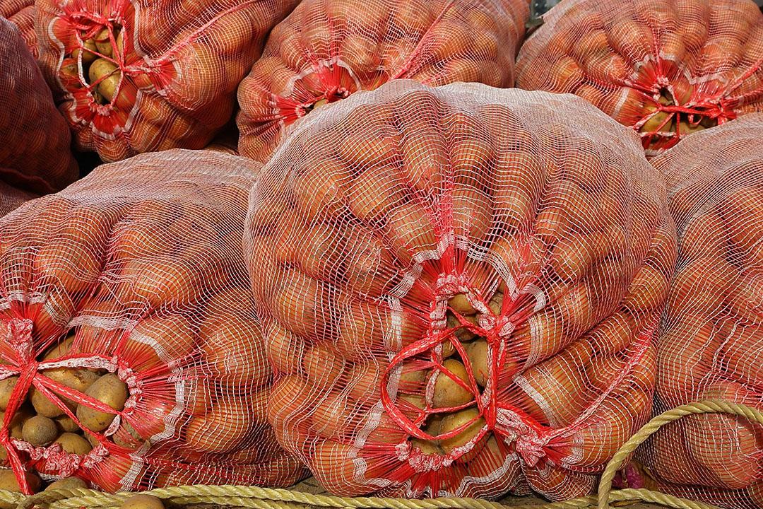 Met name in Afrika was de Nederlandse aardappel dit seizoen in trek. - Foto: Canva