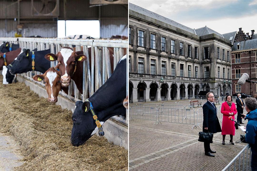 De nieuwe verkenners Tamara van Ark (VVD) en Wouter Koolmees (D66) staan de pers te woord op het Binnenhof. De aankomende kabinetsformatie is hét moment waarop voor de komende vier jaar belangrijke besluiten genomen worden, ook over de veestapel. - Foto's: Bert Jansen / ANP