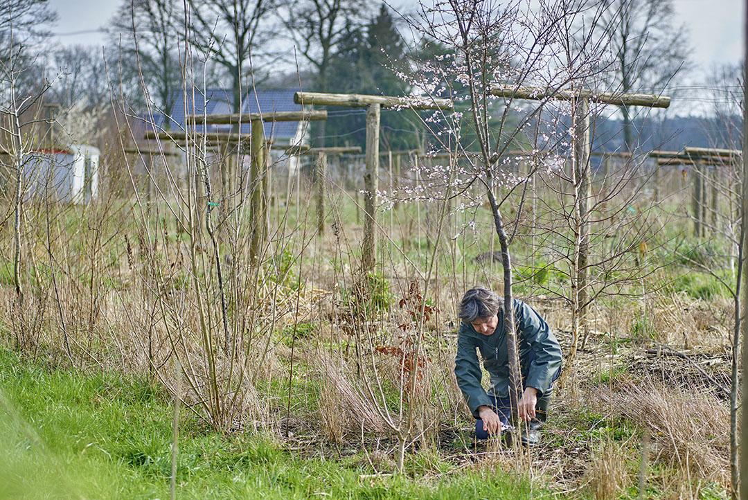 Een voedselbos in ontwikkeling. Foto: Van Assendelft Fotografie