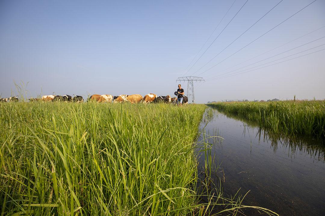Archieffoto van melkveehouder Jaring Brunia, een van de eerste boeren die grond kan pachten via Aardpeer. - Foto: Anne van der Woude