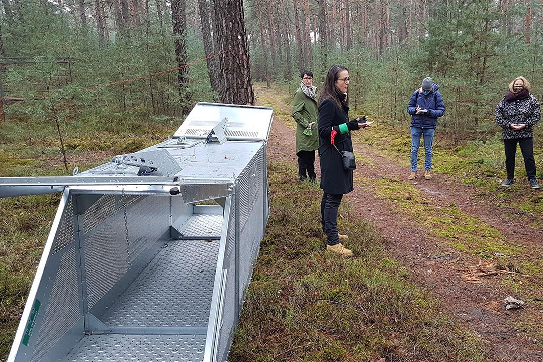 De Duitsers willen de wilde zwijnen in de witte zones zoveel mogelijk vangen. Dat doen ze met behulp van kooien. Foto: MSGIV