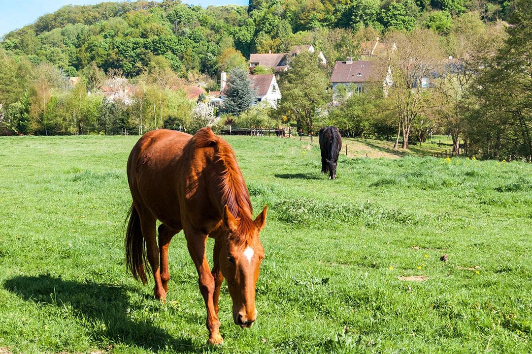 In de Vallee de Chevreuse op zo'n uurtje van Parijs wil de schatrijke zakenman Xavier Niel de grootste agrarische school ter wereld starten. Foto: Canva