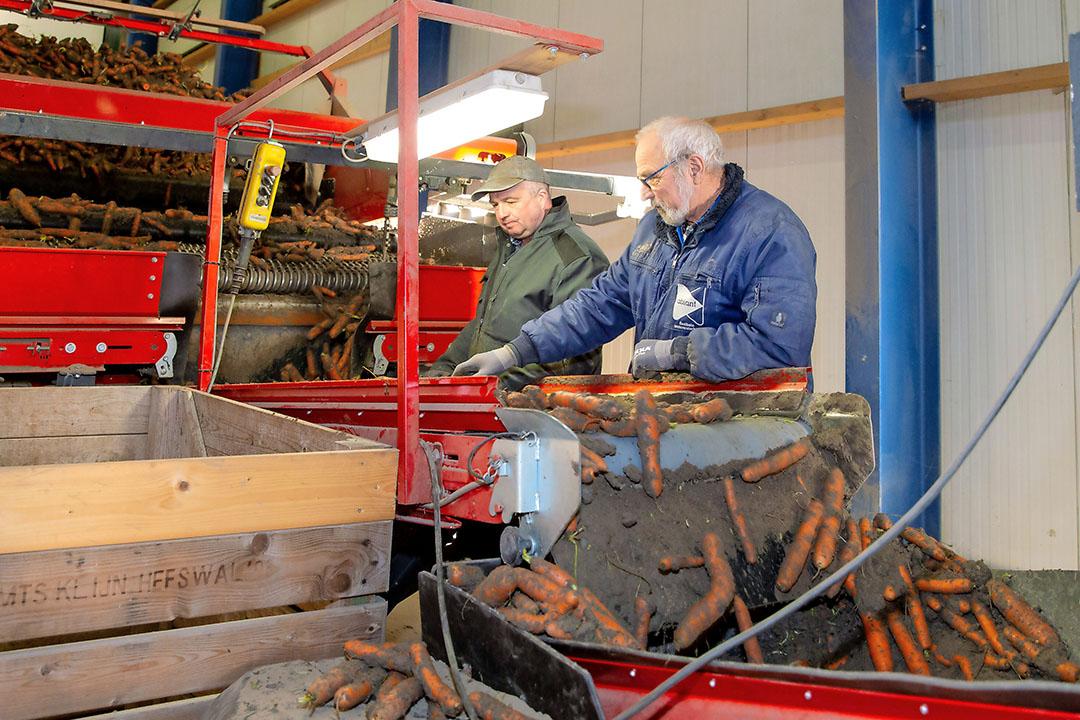 Akkerbouwer Elwin Klijn uit Uithuizermeeden levert peen af, december 2020. De bestemming is de Duitse versmarkt. Foto: Koos van der Spek