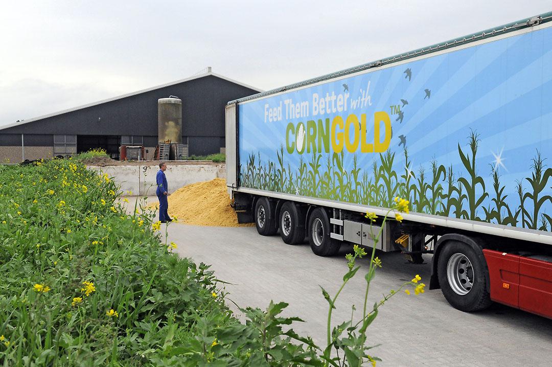 Corngold wordt gebruikt in de melkveehouderij, maar ook in de vleesveehouderij. Tate & Lyle in Koog aan de Zaan, die daar zetmeel produceert, levert het bijproduct Corngold via dealers aan veehouders. Foto: Marten Sanburg