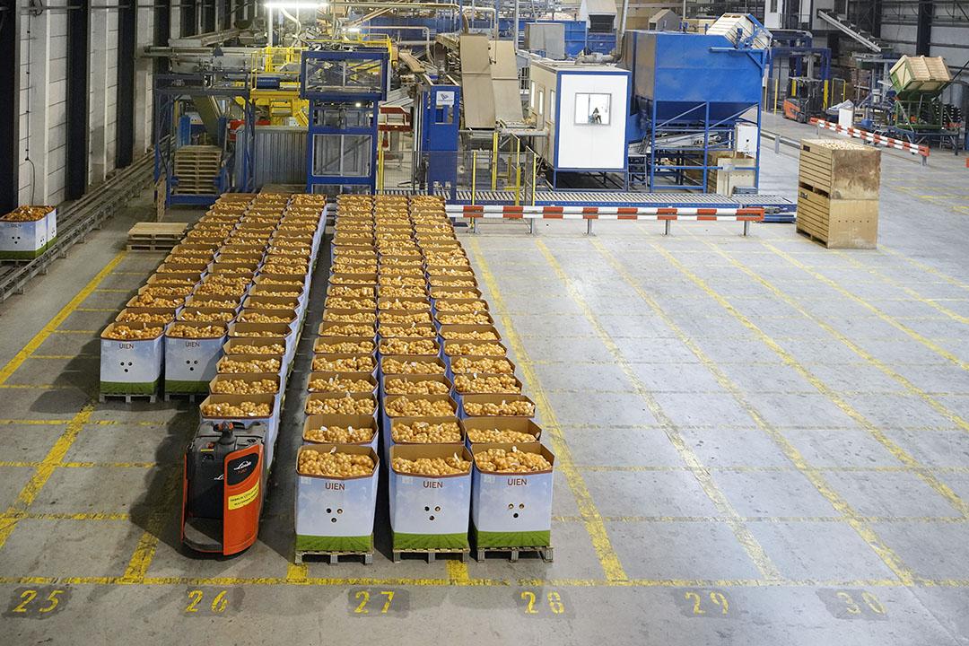 Uien staan klaar voor export. - Foto: Ruud Ploeg
