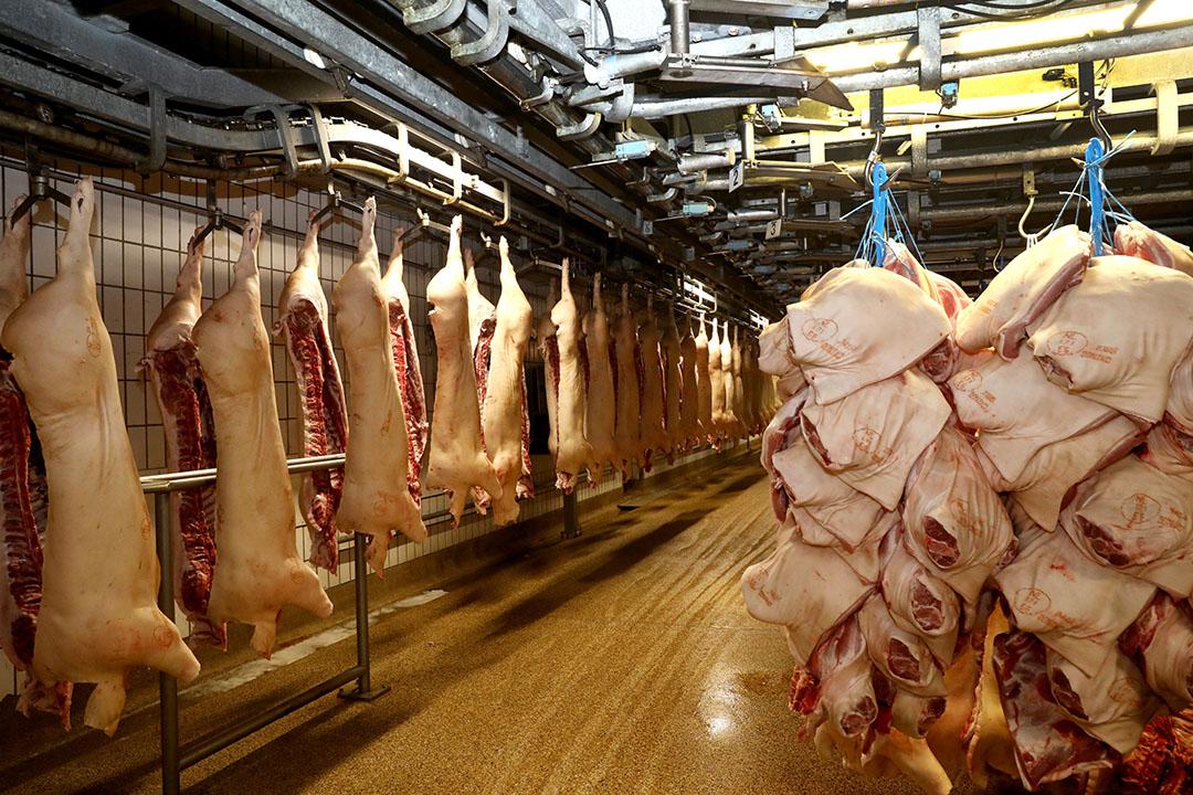 Slachterij van varkens. - Foto: Henk Riswick