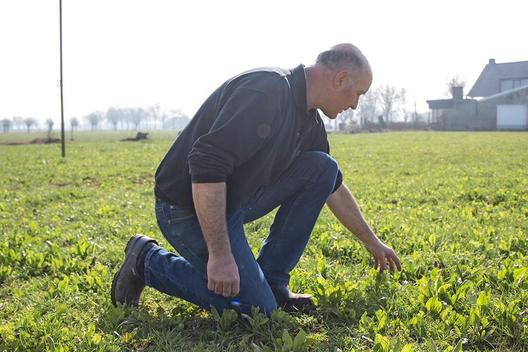 Theo Nieuwenhuis bekijkt een van zijn gewassen. Als gevolg van onzekere afzetmogelijkheden is zijn bouwplan voor 2021 nog onzeker. - Foto: Stadje Media