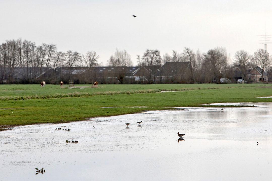 Plasdrasgebied voor weidevogels. De overheid kan boeren een inkomen geven voor diensten als natuurbeheer, aldus Erisman en Poppe. - Foto: Herbert Wiggerman
