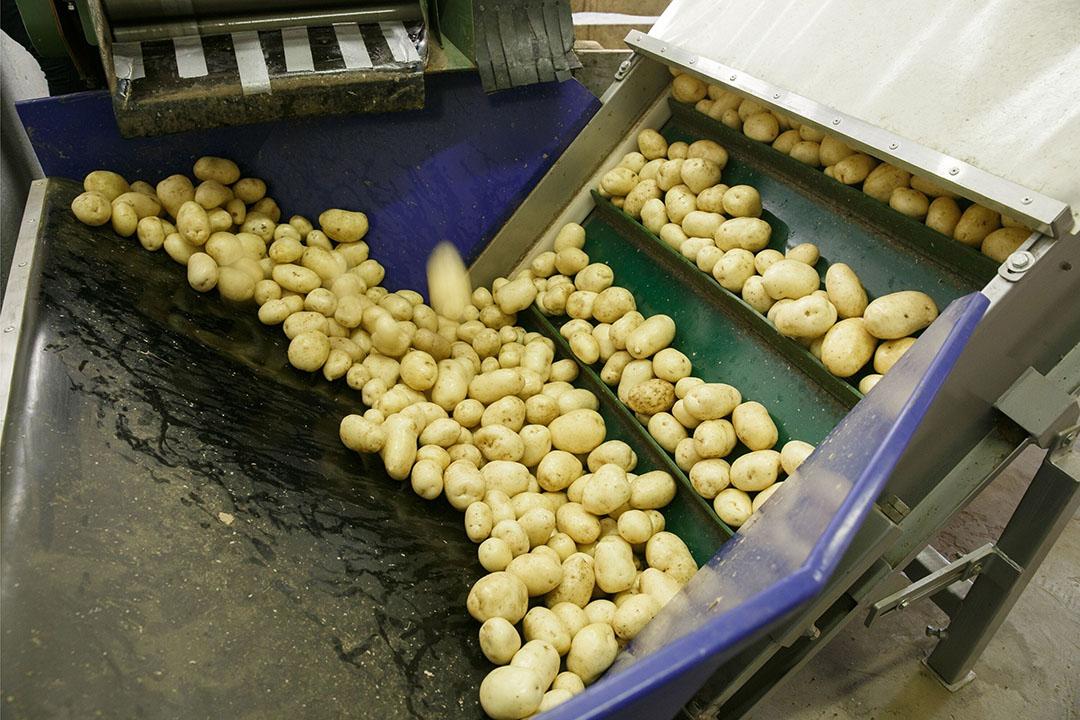De Belgische oogst aan consumptieaardappelen in 2020 is geraamd op 4,34 miljoen ton. - Foto: Canva