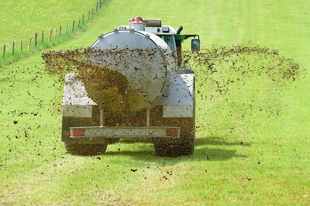 Duitse rundveehouders zijn het meest optimistisch over de nabije toekomst. - Foto: Canva