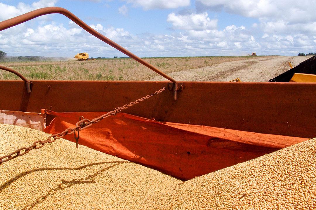 Voor soja is de productieprognose 135,5 miljoen ton, bijna 11 miljoen ton meer dan de vorige oogst. - Foto: Canva