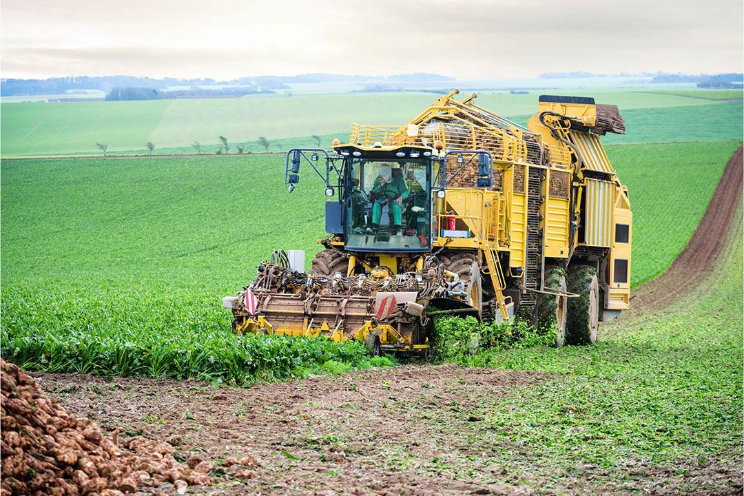 Oogst van suikerbieten in Noord-Frankrijk. - Foto: Canva