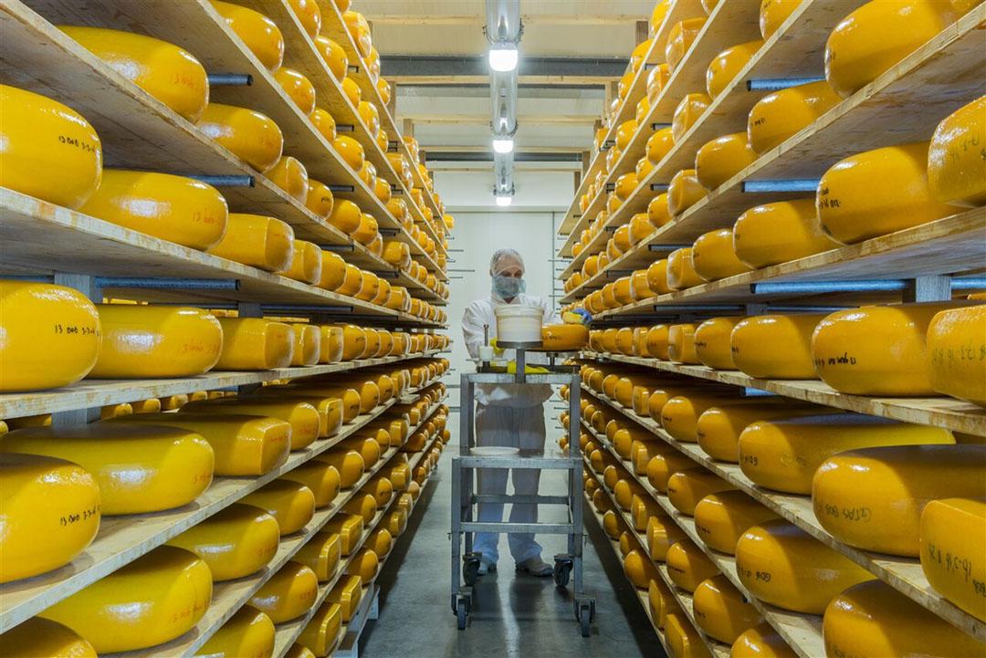 Kaas op de rijpingszolder bij Cono Kaasmakers. - Foto: ANP