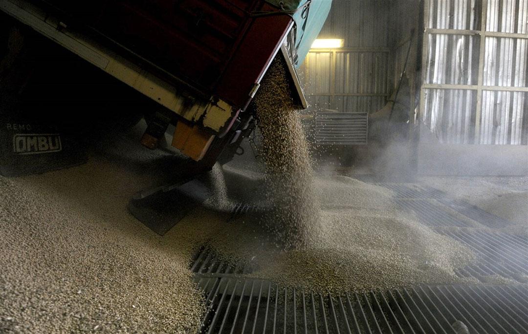 Ook bedrijven die de ruwe grondstof, zoals de sojaboon, verwerken tot meel, lopen tegen grenzen aan. - Foto: AFP