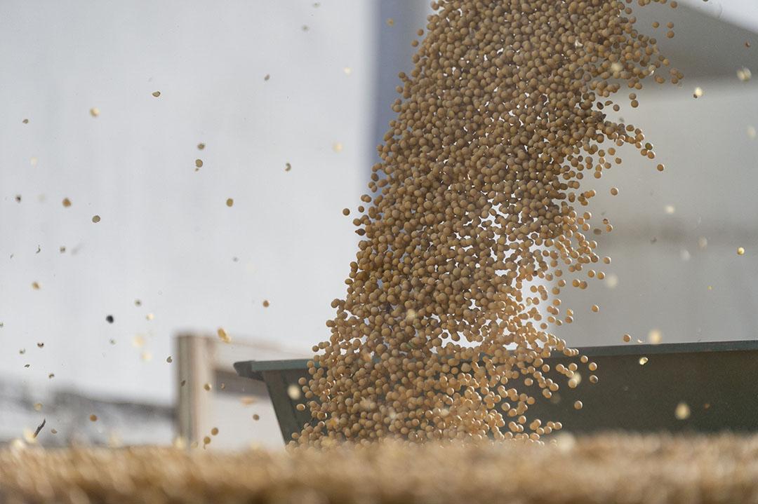 Sojabonen worden gelost in een silo. Aan soja hangt steeds meer negativiteit, onder andere door zorgen om gezondheid en ontbossing. - Foto: ANP