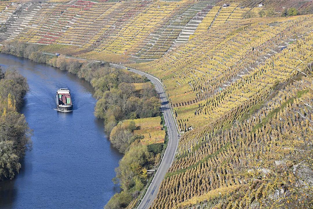 Het Duitse wijnbouwareaal is 100.000 hectare, waarvan 23.000 hectare met Riesling. - Foto: AFP