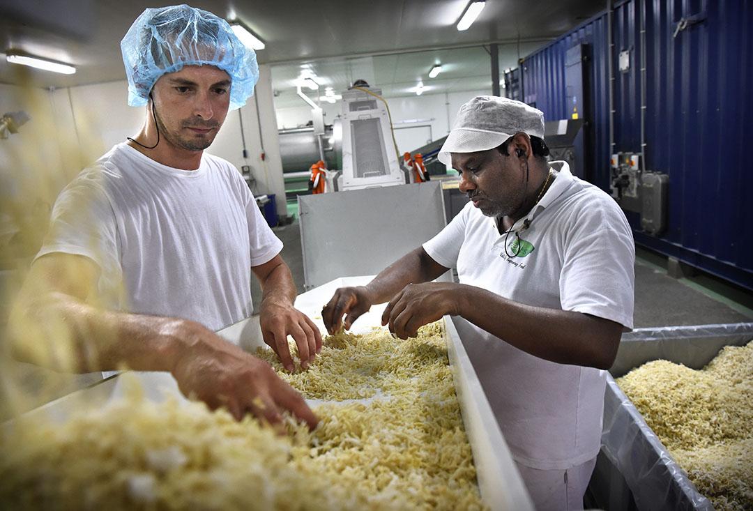 Productie van plantaardige vezels als vleesvervangers. - Foto: ANP