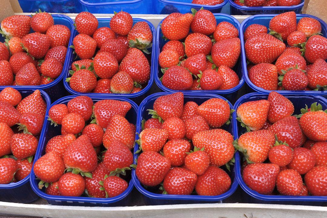 In Nederland werden overschrijdingen gevonden van gewasbeschermingsmiddelen in onder meer een monster van aardbeien. - Foto: Paul Dijkstra