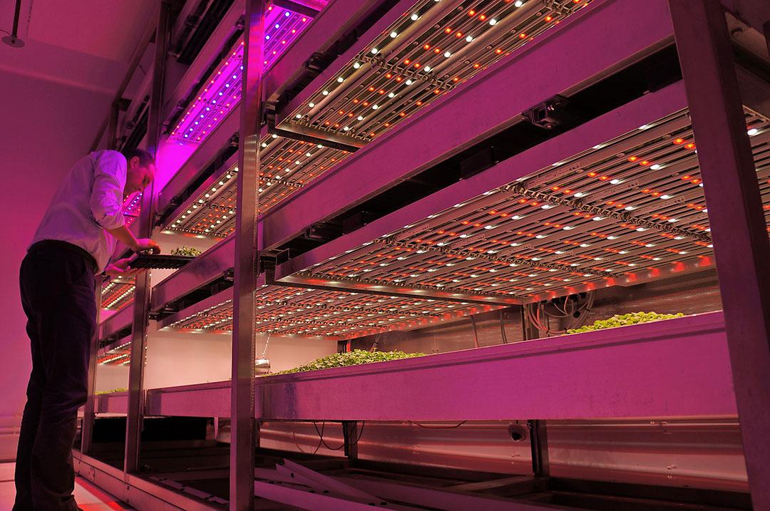 Foodswitch deed met onder meer verdere ontwikkeling van Indoor farming een gooi naar het geld in het Nationaal Groeifonds. - Foto: Gerard Boonekamp