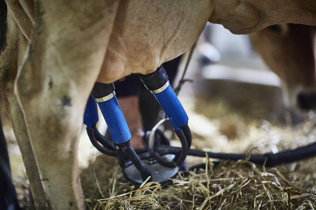 De Franse melkproductie daalde met bijna 6% in februari. - Foto: Arla
