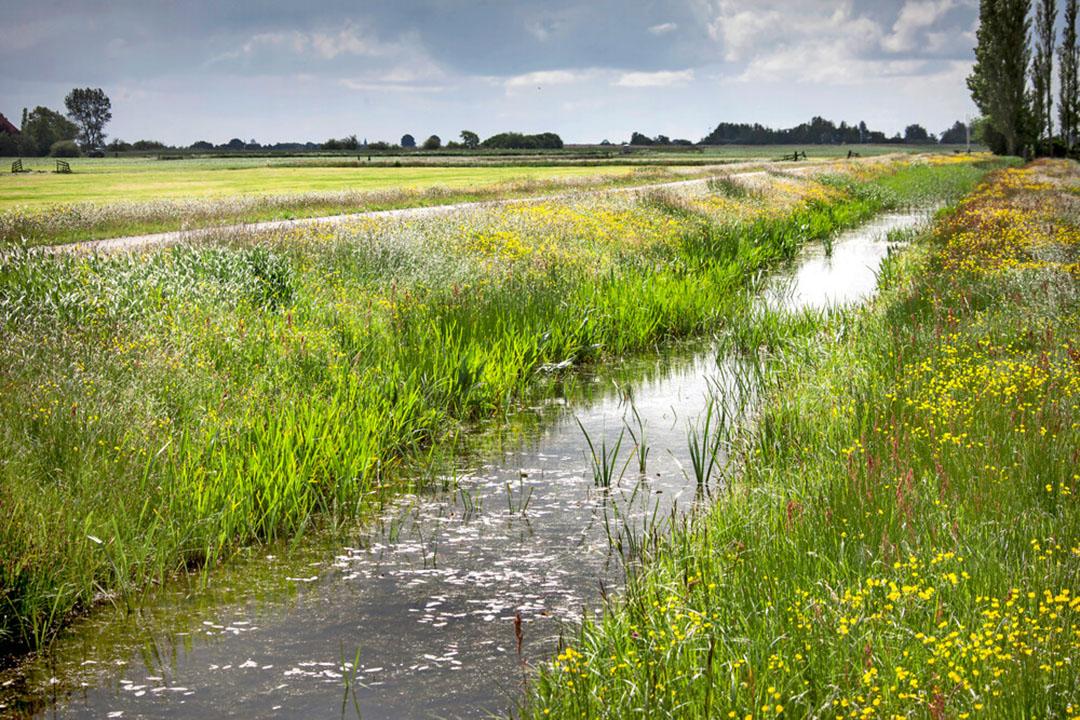 Grasland met natuurvriendelijke oever in Friesland. Vandaag komt aan de orde welk deel van de inkomenssteun kan worden ingezet in ecoregelingen, waarbij boeren extra inspanningen doen voor klimaat, milieu en biodiversiteit. - Foto: René den Engelsman
