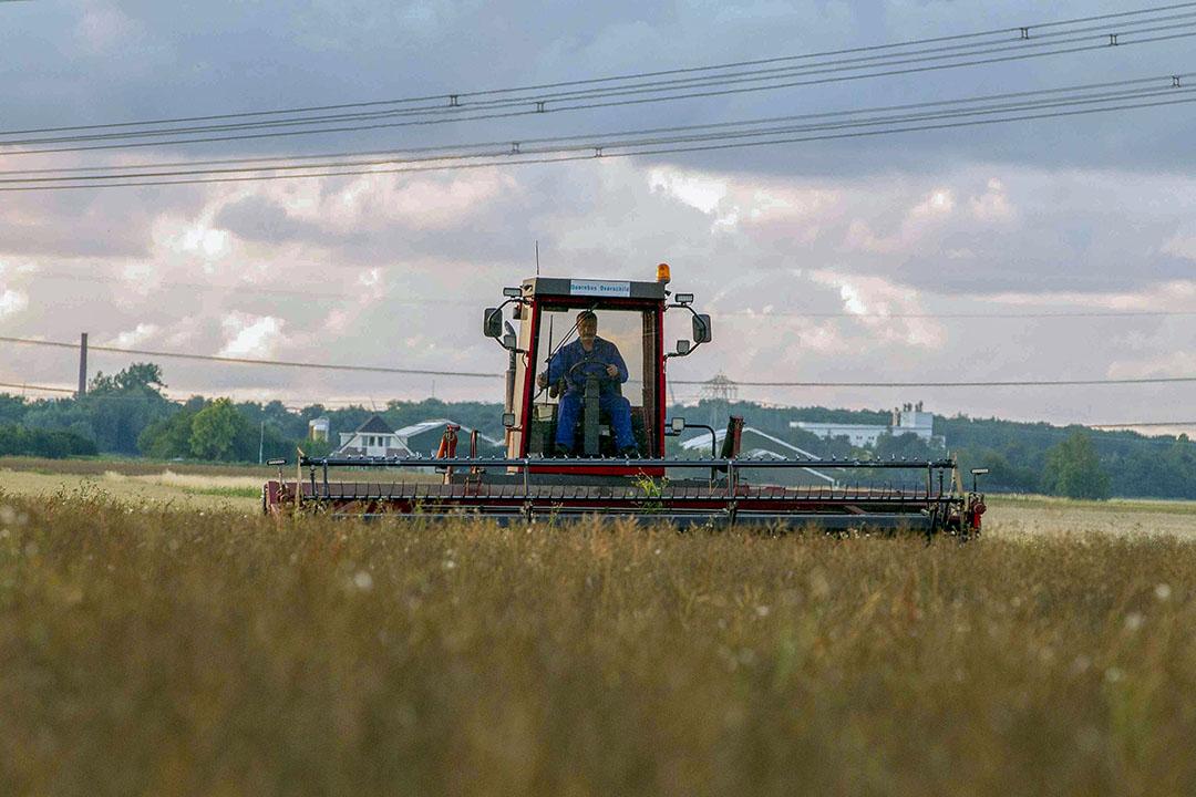 De oogst van koolzaad. - Foto: Koos van der Spek
