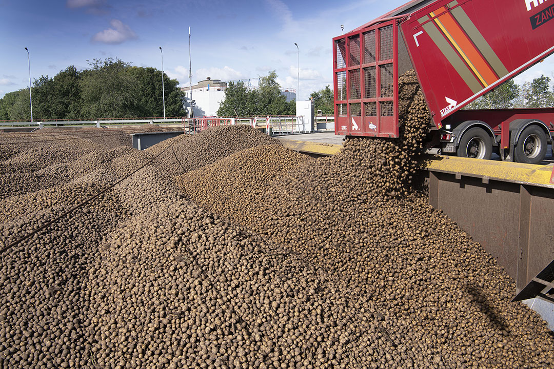 Aardappelen worden aangeleverd bij Avebe. - Foto: Mark Pasveer