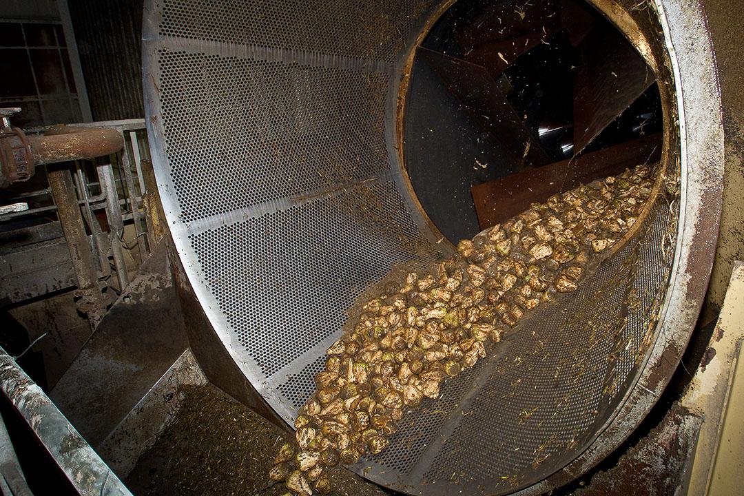 Cosun Beet Company streeft er al jaren naar om meerwaarde te creëren uit de suikerbiet. Foto: Peter Roek