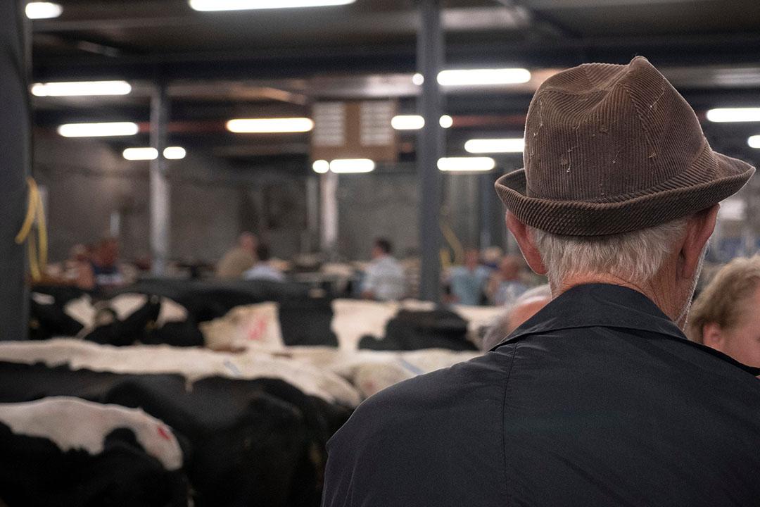 Veemarkt in Leeuwarden. - Foto: Galama Media