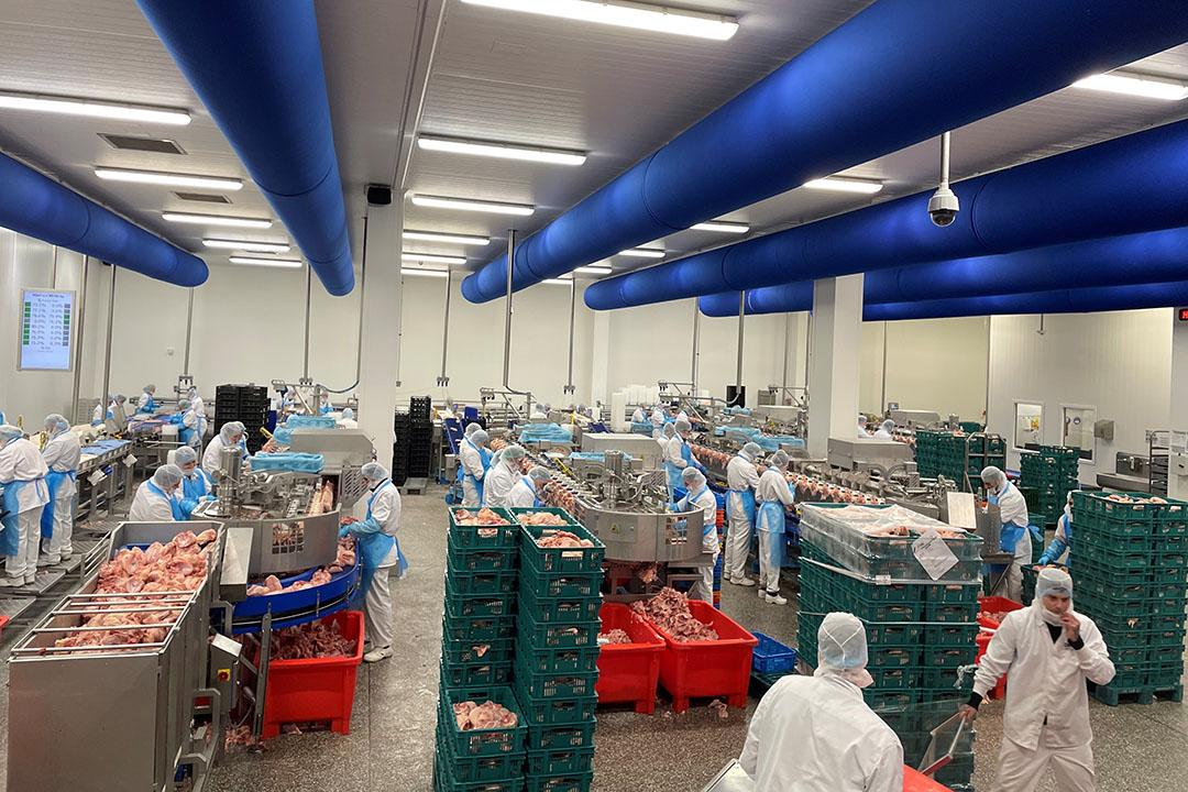 Slachterij Jan van Ee is overgenomen door PMJ. Het veiligstellen van een deel van de aanvoer was voor uitsnijderij PMJ aanleiding tot de overname van pluimveeslachterij Jan van Ee. - Foto: PMJ
