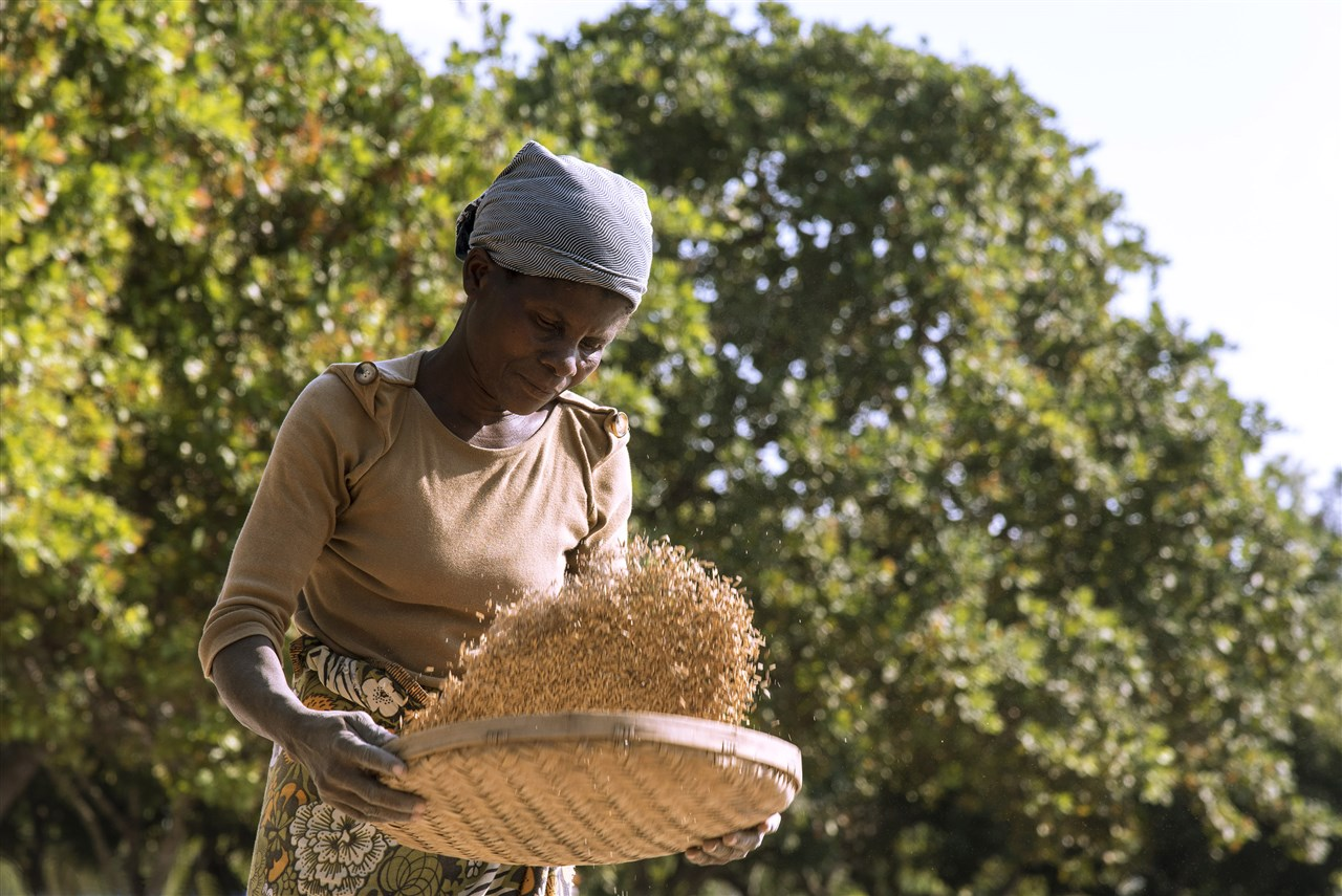 Kleine boer produceert 35% van het wereldvoedsel