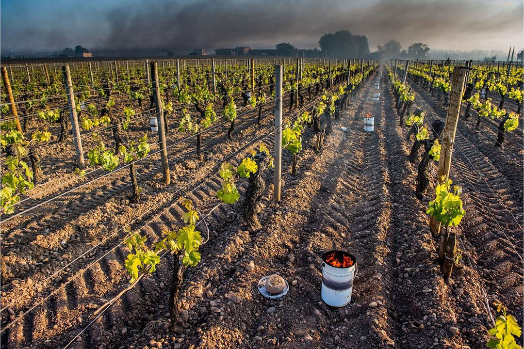 De schade door de vorst in 2021 is vermoedelijk de grootste sinds de oogstverzekering in 2005 is ingesteld. - Foto: Canva
