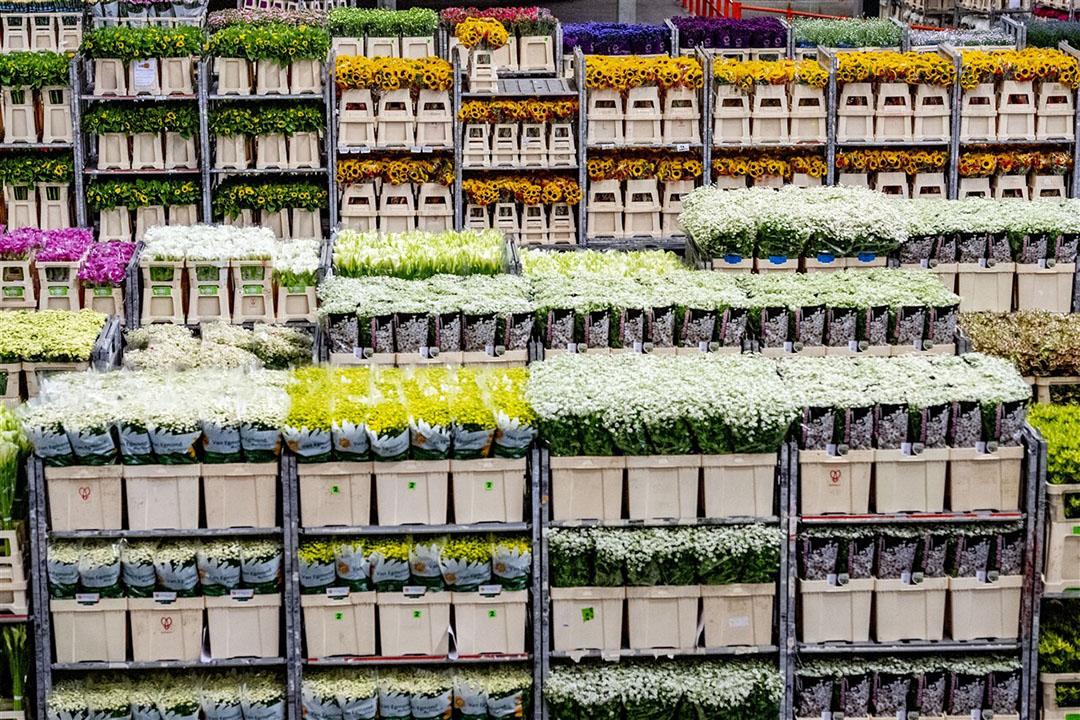 Door de hogere prijzen nu verwacht de VGB dit jaar dat er voor een recordbedrag van mogelijk €7 miljard aan bloemen en planten wordt uitgevoerd. Foto: ANP