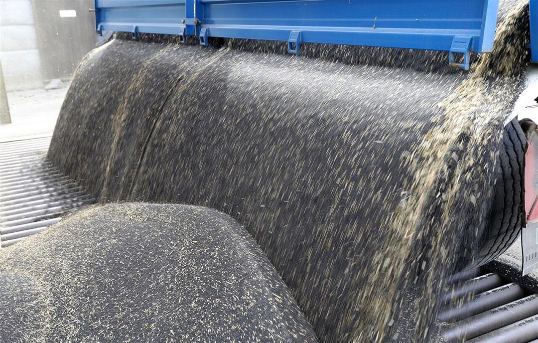 Vers geoogst koolzaad wordt gelost in een silo. - Foto: ANP