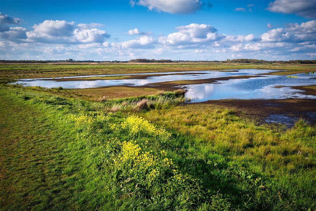 Natuurgebied bij Tienhoven valt onder Natura 2000. - Foto: ANP