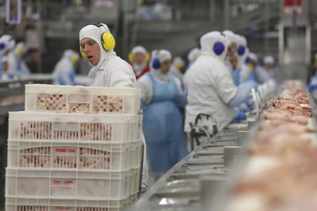 De verwerking van pluimveevlees in een slachthuis van JBS. - Foto: ANP