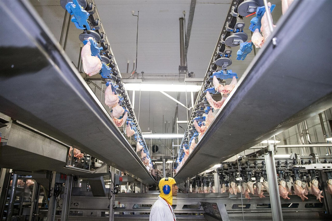 Productielijn in een pluimveeslachterij van BRF in Rio Verde, Brazilië. - Foto: ANP