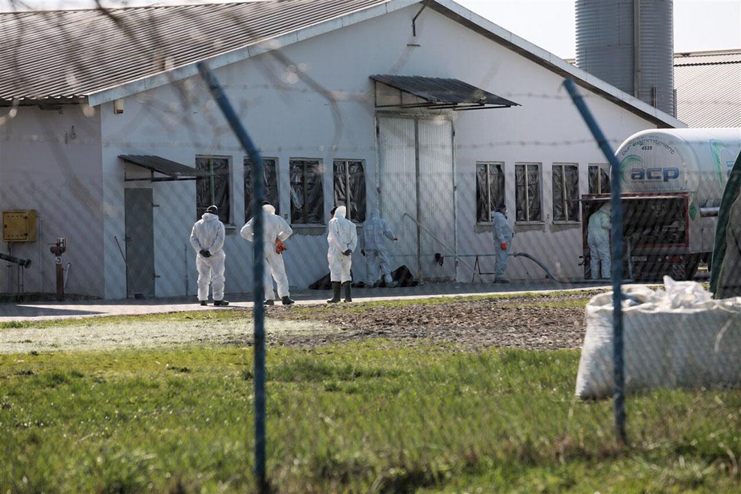 Een kalkoenenbedrijf in het Westen van Polen wordt geruimd na een uitbraak van vogelgriep. - Foto: ANP