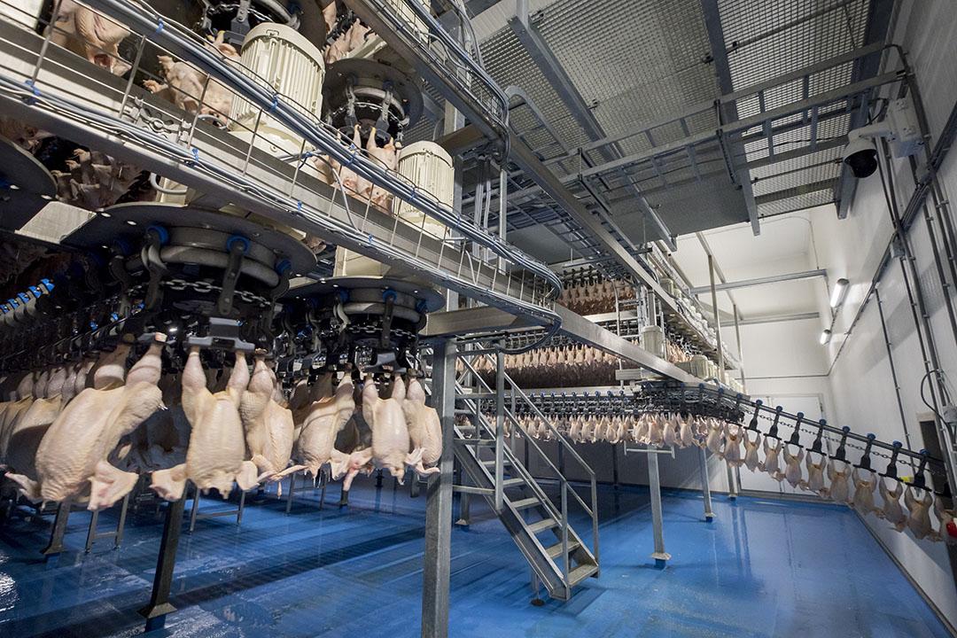Verwerking van vleeskuikens in een pluimveeslachterij. Er spelen veel fusies en overnames in de wereld van pluimveeslachterijen. - Foto: Koos Groenewold