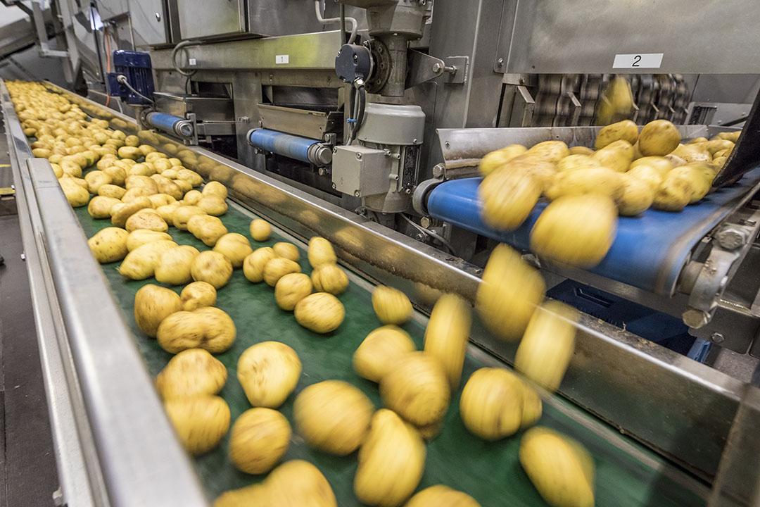 Aardappelen in een fritesfabriek. - Foto: Koos Groenewold