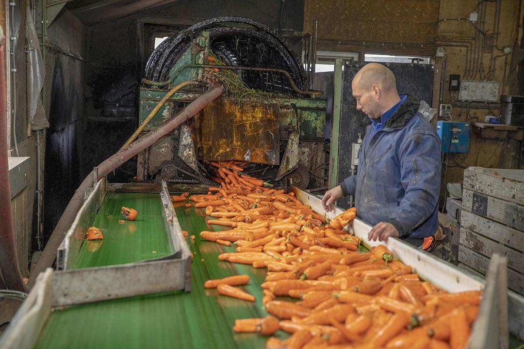 Het sorteren en wassen van peen. - Foto: Koos van der Spek