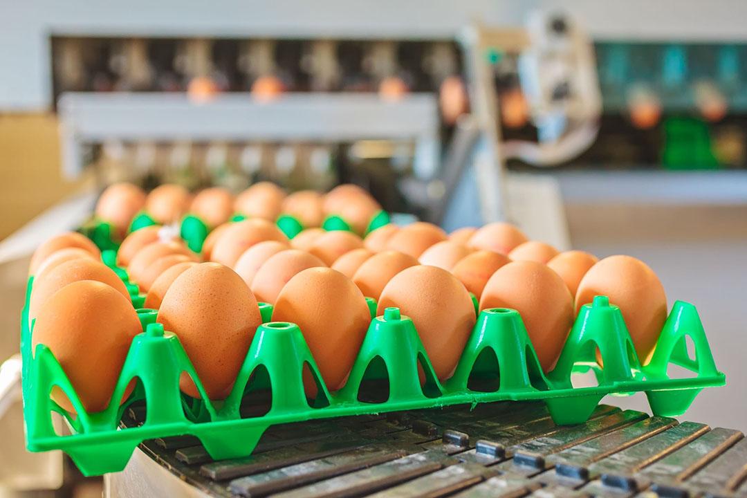 groothandel in voedingsmiddelen