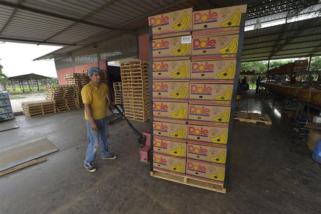 Bananen staan klaar voor export in Ecuador. - Foto: ANP