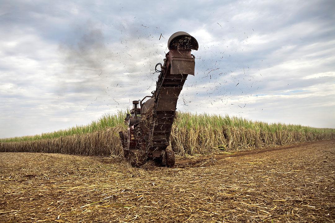 Tegenvallende opbrengst van suikerriet in Brazilië is een van de oorzaken van het dreigende suikertekort. Foto: ANP