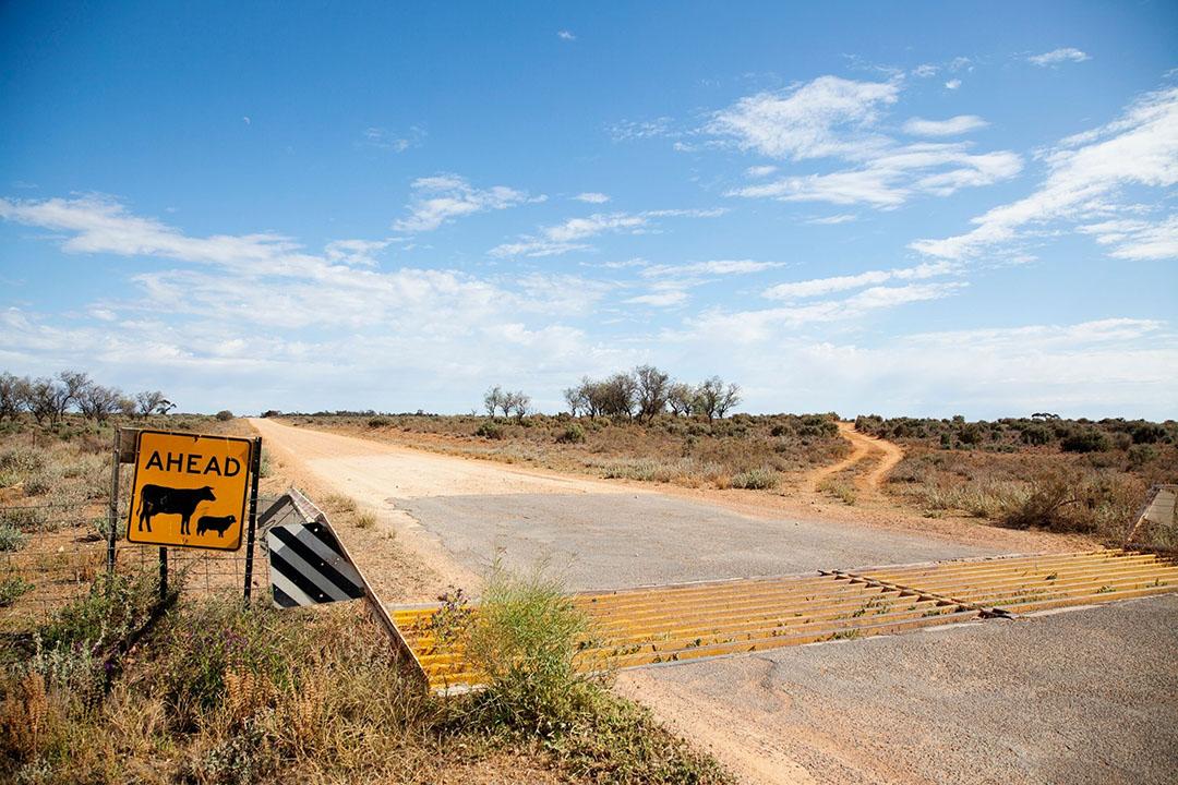 De resultaten in Australië hebben volgens Greenville te maken met sterke veeprijzen in het binnenland en gunstige uitvoercijfers van graan na de op één na grootste winteroogst ooit. Foto: Canva