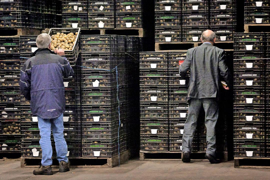 Handelaren bekijken de aardappelen die geveild gaan worden. - Foto: Roel Dijkstra